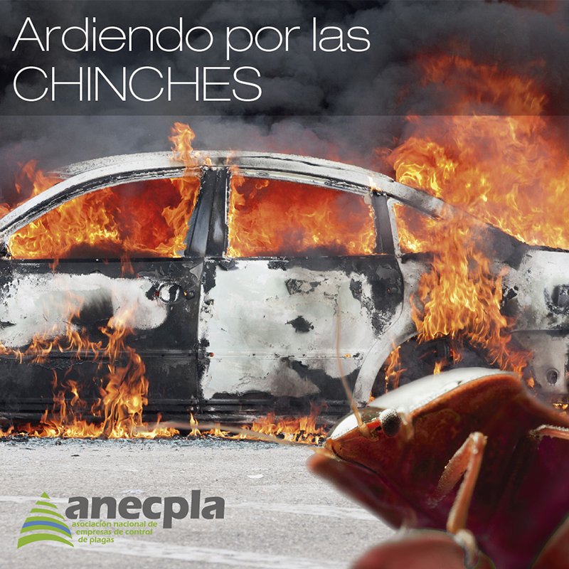 "<p><strong>""ARDIENDO"" POR LAS CHINCHES</strong></p>"