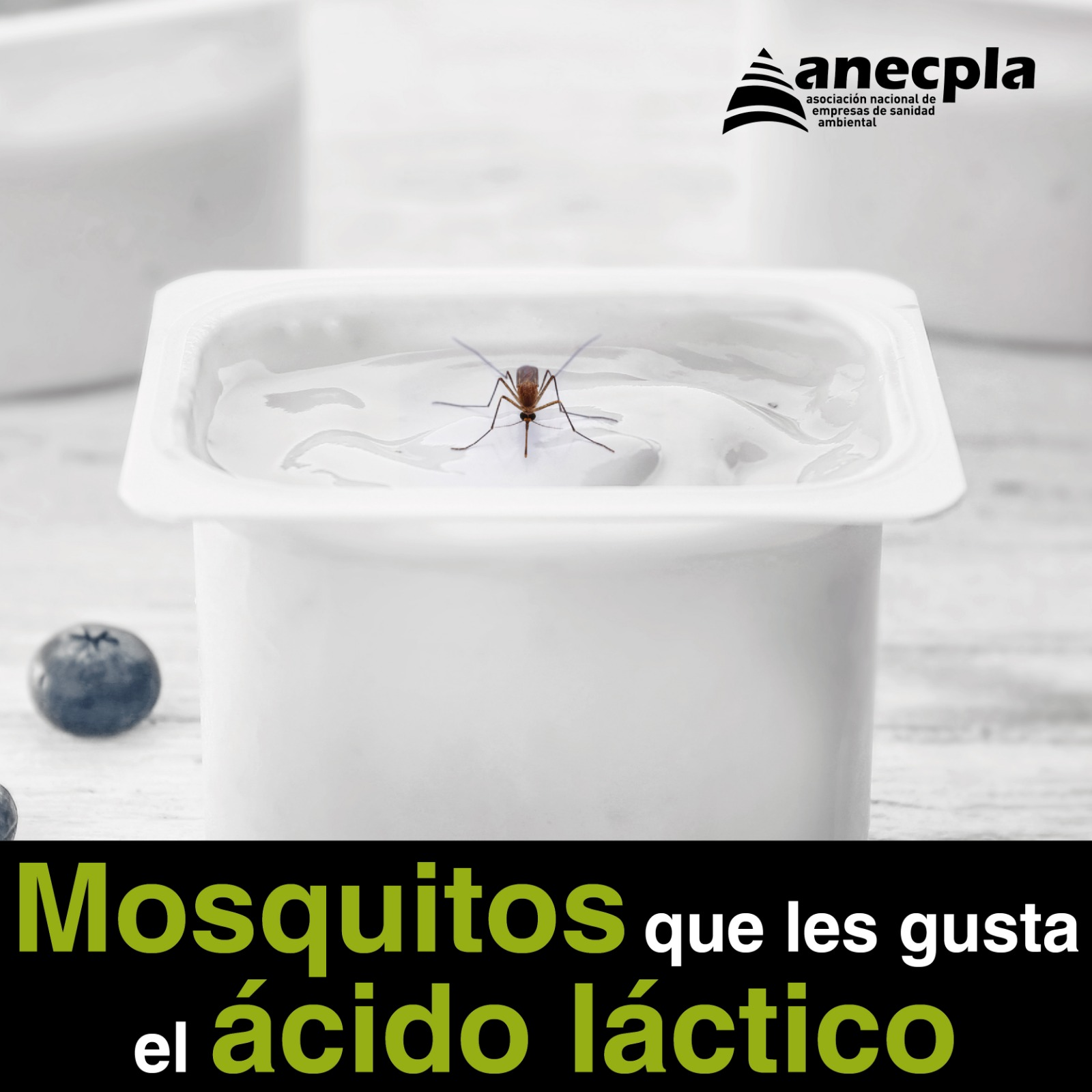 <p><strong>MOSQUITOS QUE LES GUSTA EL &Aacute;CIDO L&Aacute;CTICO</strong></p>